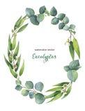 Corona ovale di vettore dell'acquerello con le foglie ed i rami verdi dell'eucalyptus illustrazione di stock