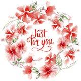 Corona rosa del fiore del Wildflower in uno stile dell'acquerello Fotografia Stock Libera da Diritti