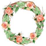 Corona rosa del fiore del Wildflower in uno stile dell'acquerello Fotografia Stock