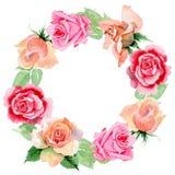 Corona rosa del fiore del Wildflower in uno stile dell'acquerello Fotografie Stock Libere da Diritti