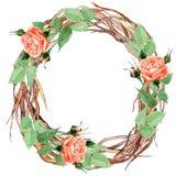 Corona rosa del fiore del Wildflower in uno stile dell'acquerello Immagine Stock