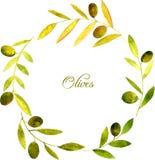 Corona rotonda con le foglie verdi e le olive dell'acquerello Immagini Stock Libere da Diritti