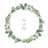 Corona rotonda di vettore dell'acquerello con l'eucalyptus del dollaro d'argento Fotografia Stock