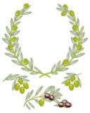 Corona verde oliva Fotografía de archivo