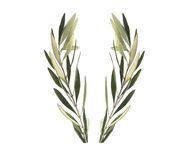 Corona verde oliva del ramo di ulivo immagini stock