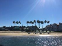 Coronado plaży drzewka palmowe Zdjęcie Royalty Free