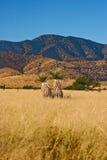 Coronado state park Stock Photo