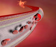 Coronary artery. Normal coronary artery and heart in the background Royalty Free Stock Image
