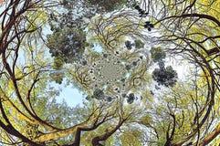 Coronas de árboles con efectos Imágenes de archivo libres de regalías