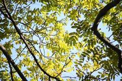 Coronas de árboles contra el cielo Imágenes de archivo libres de regalías
