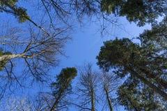 Coronas de árboles en el cielo de marzo Fotos de archivo libres de regalías