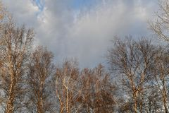 Coronas de ?rboles en el fondo de nubes imagen de archivo libre de regalías