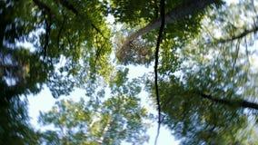 Coronas de la tarde soleada del verano de los árboles El movimiento dinámico de la cámara almacen de video