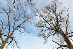 Coronas de la variedad de los árboles en el bosque de la primavera contra el cielo nublado Vista inferior de los árboles Imágenes de archivo libres de regalías
