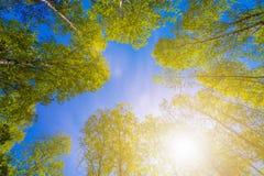 Coronas de la variedad de los árboles en el bosque de la primavera contra el cielo nublado y el sol brillante Vista inferior de l Fotografía de archivo
