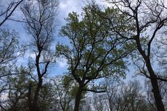Coronas del árbol Foto de archivo
