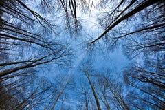 Coronas del árbol de la primavera en el cielo azul Imágenes de archivo libres de regalías