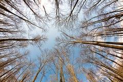 Coronas del árbol de la primavera en el cielo azul Fotos de archivo libres de regalías