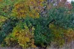 Coronas del árbol del otoño Fotografía de archivo libre de regalías