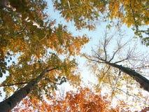 Coronas del árbol Fotos de archivo libres de regalías