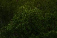 Coronas verdes del árbol en el parque Imágenes de archivo libres de regalías