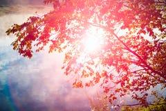 Corone degli alberi nella foresta di primavera dal fiume contro cielo blu con il sole Esponga al sole ed esponga al sole i raggi  Immagini Stock
