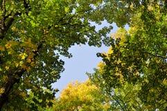 Corone dell'albero Immagine Stock