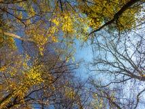 Corone dell'albero di caduta Fotografie Stock
