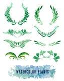 Corone e struttura degli acquerelli delle piante Fotografia Stock Libera da Diritti
