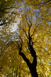 Corone las hojas verdes y amarillas de los árboles del otoño Imagenes de archivo