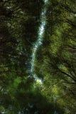 Corone verdi dell'albero immagini stock libere da diritti