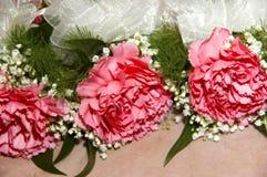 Corpetti per i garofani rosa Fotografia Stock Libera da Diritti