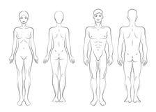 Corpo Immagini Stock Libere da Diritti
