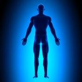 Corpo completo - vista traseira - conceito azul ilustração stock
