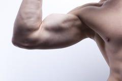 Corpo de macho 'sexy' (parte) imagem de stock