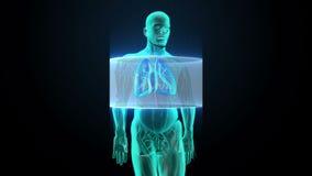 Corpo di esame Polmoni umani giranti, sistemi diagnostici polmonari, luce blu dei raggi x illustrazione vettoriale