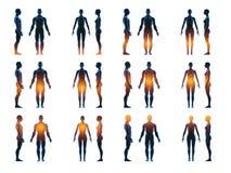 Corpo fêmea masculino humano de raio x Conceito da anatomia O isolado, 3d rende Imagens de Stock Royalty Free