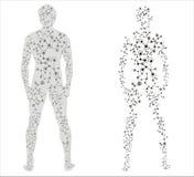 Corpo humano Fotos de Stock
