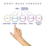 Corpo Max Index fotos de stock royalty free