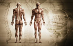 Corpo umano Fotografie Stock