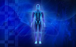 Corpo umano illustrazione di stock