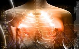 Corpo umano e polmoni illustrazione vettoriale