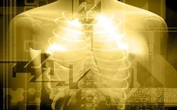 Corpo umano e polmoni royalty illustrazione gratis