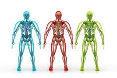 Corpo umano e scheletro illustrazione vettoriale