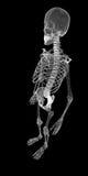 Corpo umano, scheletro Fotografie Stock Libere da Diritti