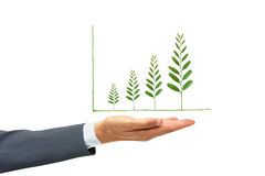 Corporate social responsibility. Businessman holding green tree leaves arranged as a growing graph / csr / sustainable development / corporate social Stock Images