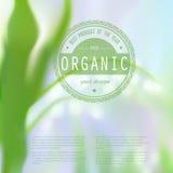 Corporate website design. Royalty Free Stock Photos