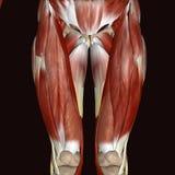 corps humain de femelle de l'illustration 3d Images stock