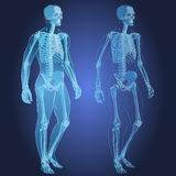 Corps humain et squelette Image stock