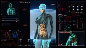 Corps humain féminin de bourdonnement balayant les organes internes, système de digestion Lumière bleue de rayon X sur l'interfac illustration libre de droits
